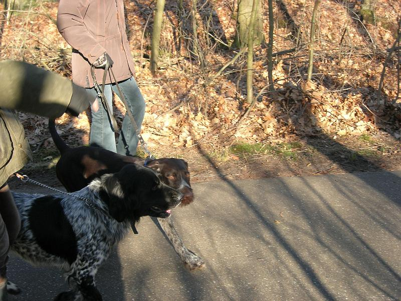 hondenschool-wandeling-16-februari-2008-037