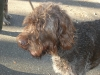 hondenschool-wandeling-16-februari-2008-026